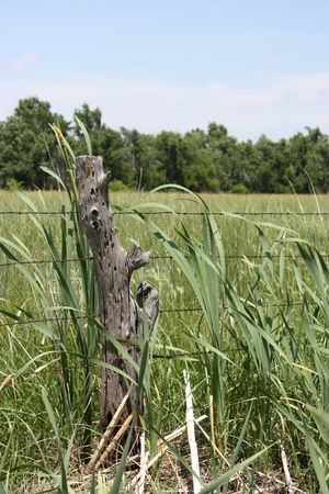 fencepost: A post on a fence with cattails.