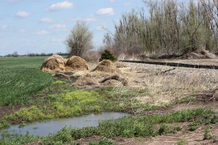 falling apart: Haybales that were falling apart in a field by railroad tracks,wheat field,water,and trees.
