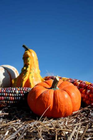 Mini Pumpkins en un pajar con cielo.  Foto de archivo - 5927930