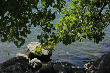 A shot at Sterling Lake in Kansas USA with water and limbs hanging over the water with rocks. With the green leaves on the Limbs. Imagens