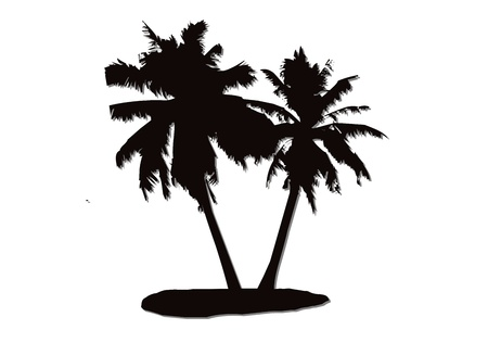 coconut tree for black and white image on a white background photo