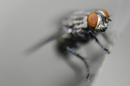 irritate: fly Stock Photo