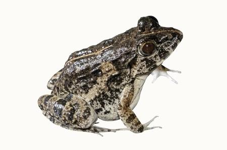 warts: frog