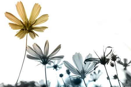 Retro flowers,Vintage Flowers background 写真素材
