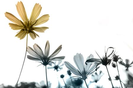 Retro flowers,Vintage Flowers background Standard-Bild