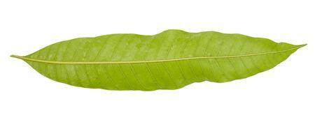 Leaf green leaf macro decoration.