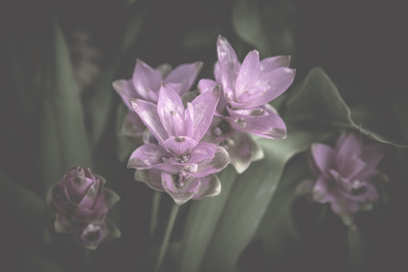 heartwarming: Flowers in the design of natural dark tones. The image is the art