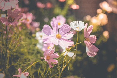 flowers vintage background tone design