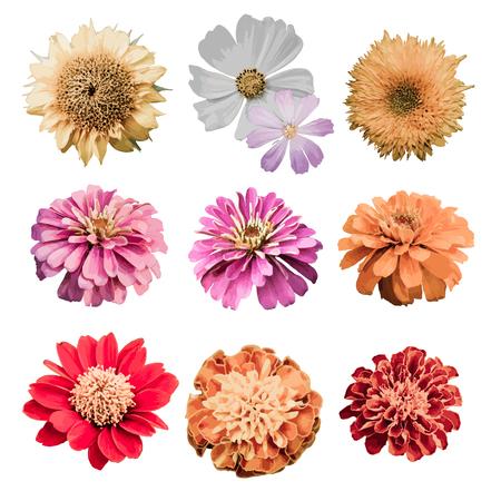 Vektor-Blumen-Design-Element-Set