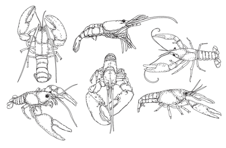 Hand drawn sketch style seafood set. Shrimps, prawns collection vector illustrations.