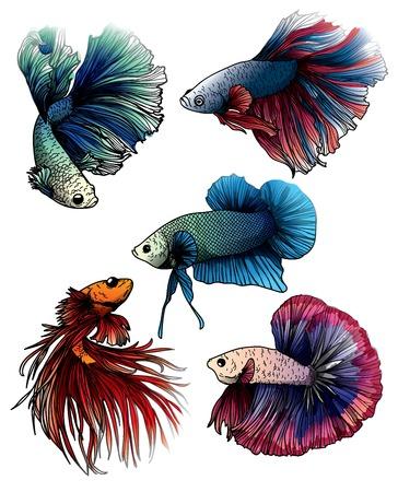 Colorido dibujo a mano de peces betta splendens y boceto con ilustración de arte lineal aislado sobre fondo blanco.