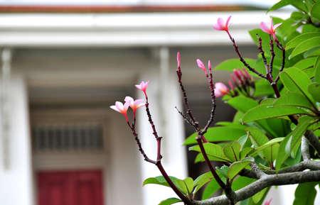 anthesis: flower in garden