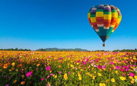 Beautiful colors of the hot air balloons flying on the cosmos flower field
