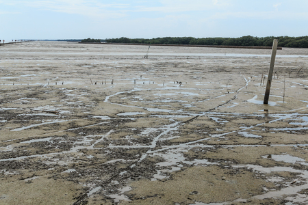 spring tide: Maritime landscape at low tide water - at Bang Pakong, Chachoengsao Province, Gulf of Thailand