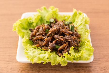 Fried insects - Cricket insect crispy