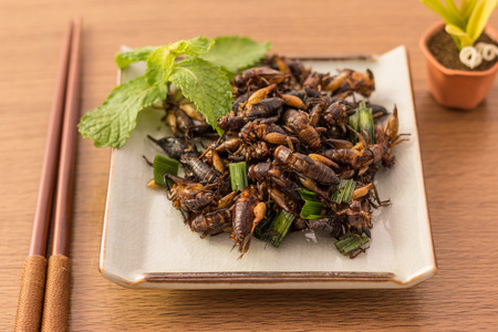 Fried insects - Cricket insect crispy with pandan after fried and add a light coating of sauce and garnish Thai pepper powder on white dish with chopsticks on wooden background, Select focus Stock Photo