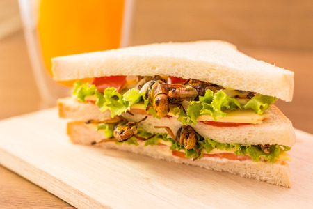 Sandwich made of fried insect meat and mozzarella cheese, mayonnaise and tomato, lettuce with orange juice presented on a wooden board. Close-up, Select focus. Stock Photo