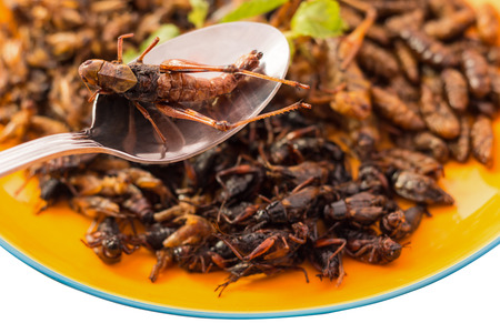 phuket food: Food insect - Fried insects or Wood worm insect, Bamboo worm insect, Grasshopper insect and Cricket insect crispy with pandan after fried and add a light coating of sauce on spoon with isolated on white background