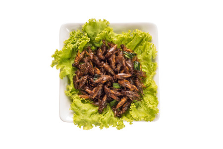 Food insect - Fried insects or Cricket insect crispy with pandan after fried and add a light coating of sauce and garnish Thai pepper powder on white dish with isolated on white background, Top view Stock Photo