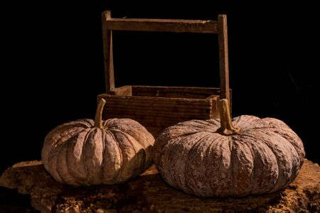 pumpkin patch: Pumpkins with dark background - Traditional pumpkins and wooden crate on rustic old wooden boards with dark background