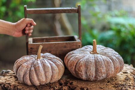 wooden crate: Pumpkins - Autumn pumpkins with wooden crate on rustic old wooden surface background. Still Life, Vintage, Closeup, Select focus.