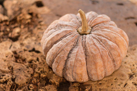 mini jack: Pumpkin on wooden background - Traditional pumpkin on old wooden boards background, Closeup, Select focus.