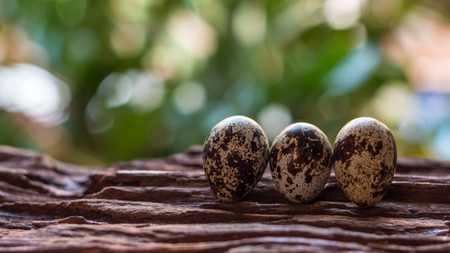 Quail eggs - Quail eggs on old brown wooden surface with green blurred natural leaves background, selective focus.