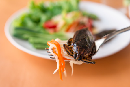 Papaya Salad - Thai green papaya salad and Lethocerus indicus on a fork Traditional spicy Thai food. Closeup, Select focus