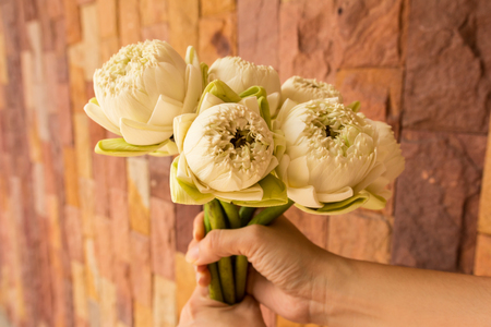 Lotus flowers - White lotus flowers in woman hands with modern stone wall background. White color symbolizes being pure in body, mind and spirit. It symbolizes the heart of the Buddhas. Select focus
