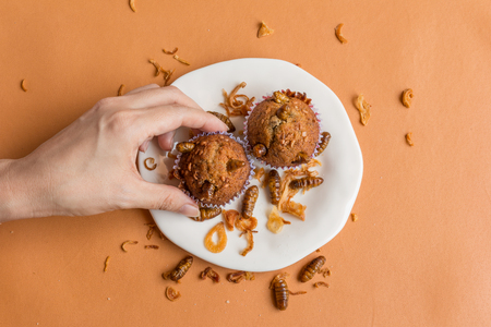 Insect foods in banana cupcakes -  Hands holding a banana cupcake worm Insect on orange tablecloth background. Healthy meal high protein diet concept. Close-up, Selective focus.