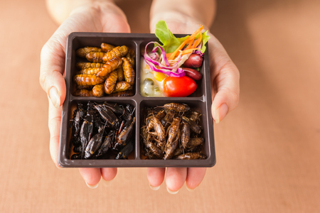 Insect food collection -  Human female hands holding Cricket, worm insects with vegetable salad in the brown food boxes. Healthy meal high protein diet concept. Close-up, Selective focus. Stock Photo