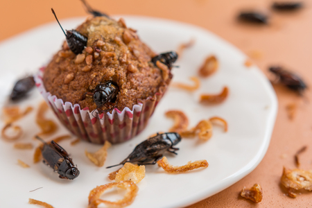 Banana cupcakes with insect foods - Banana cupcakes with insect foods on a white plate and crispy shallots fried on orange tablecloth background. Healthy meal high protein diet concept. Close-up, Selective focus. Stock Photo