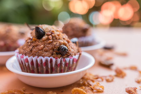 Banana cupcake with insect foods - Homemade insect foods in the banana cupcakes on stainless steel sieve with bokeh background. Healthy meal high protein diet concept. Selective focus.