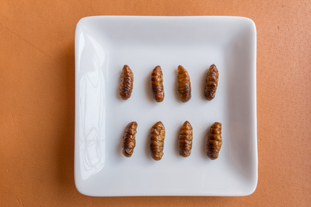 Insect foods in banana cupcakes - A white plate for Insect foods in banana cupcakes on orange tablecloth background. Healthy meal high protein diet concept. Top view, Selective focus. Stock Photo