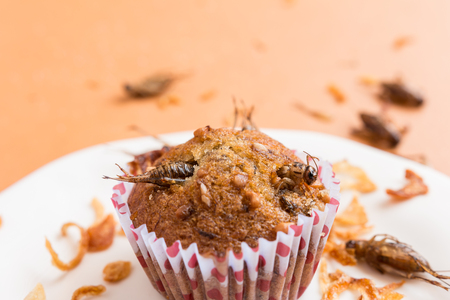 Banana cupcakes with insect foods - Banana cupcakes with insect foods on a white plate and crispy shallots fried on orange tablecloth background. Healthy meal high protein diet concept. Close-up, Selective focus. Banque d'images