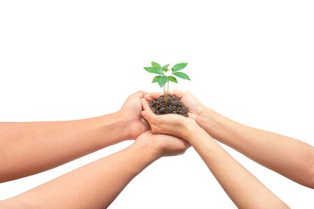 Plant in hands, Isolated on white background with clipping path. The concept of ecology, environmental protection, nature, and care. Zdjęcie Seryjne