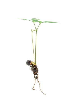 Growing plant, with root isolated on white background, clipping path. Concept of ecology, environmental protection, nature, and care.