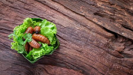 Fried Worm, Insect food with vegetables in the bowls made from banana leaves on wooden background with copy space for text. Top view. Zdjęcie Seryjne