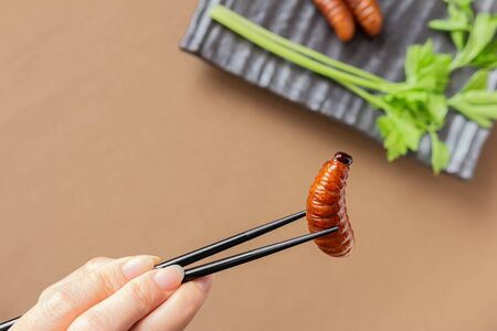 Fried Worm in chopsticks, Insect food with vegetables in a brown plate on table background. Closeup, Top view, Selective focus. Zdjęcie Seryjne