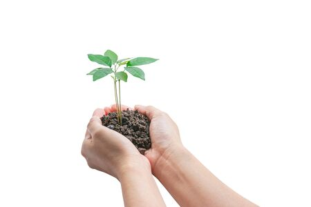 Hands holding a young plant, Isolated on white background . Concept of Environmental and Ecology protection.