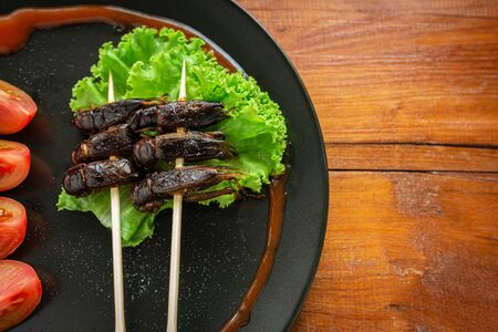 Fried Crickets, Insect food in the skewer on a brown plate. Closeup, Top view, Copy space. Zdjęcie Seryjne