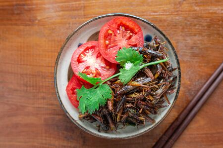 Fried Crickets, Insect food with Vegetables, Tomato in the bowls. Top view. Selective focus. Zdjęcie Seryjne