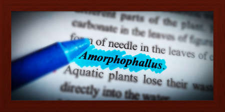 Amorphophallus word highlighted with closeup view on book word educational related terminology presented for students awareness.