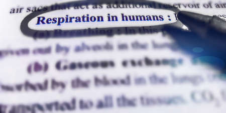 Respiration in humans word highlighted with closeup view on book word educational related terminology presented for students awareness.