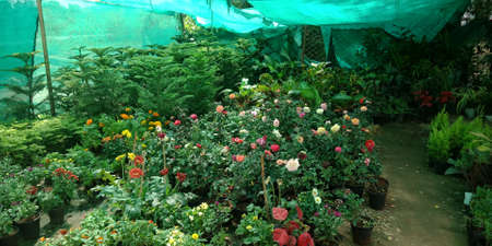 DISTRICT KATNI, INDIA - SEPTEMBER 24, 2019: Beautiful plants presented into the open area natural flower outlet in main market street.