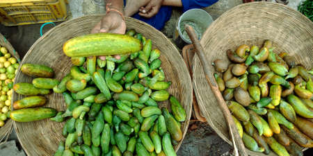 DISTRICT KATNI, INDIA - OCTOBER 13, 2019: An indian village greengrocer presenting fresh Cucumber at vegetable market in asian street.