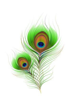 piuma di pavone: illustrazione vettoriale di Colorful Peacock Feather contro bianco