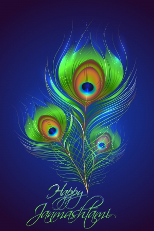 peacock feathers: illustration of Peacock feather in Janmashtami background