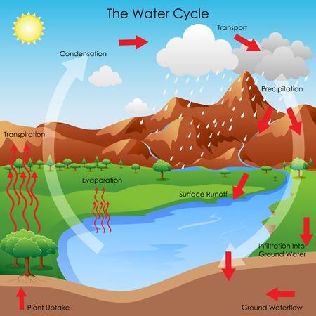 vapore acqueo: illustrazione vettoriale di diagramma che mostra il ciclo dell'acqua Vettoriali