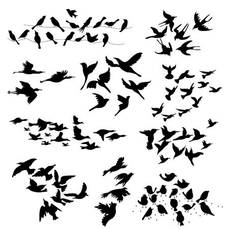 illustratie van het silhouet van vliegende vogels